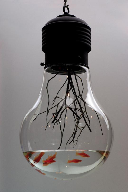 Une ampoule pas comme les autres !