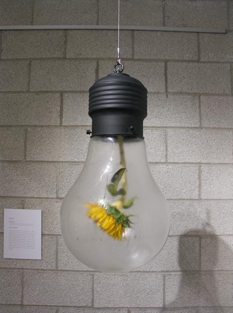 Ampoule extraordianire artiste coreen Kim MyeongBeom