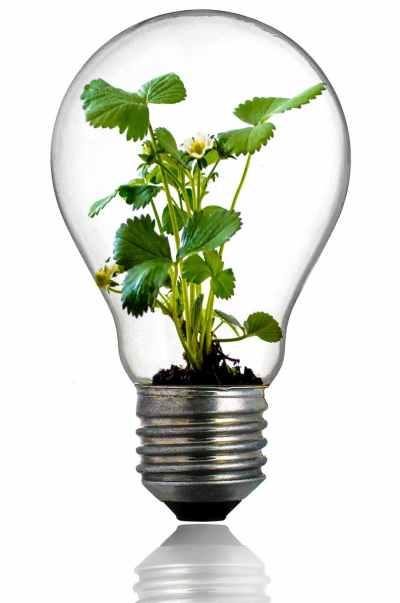 Comment recycler ses ampoule ?